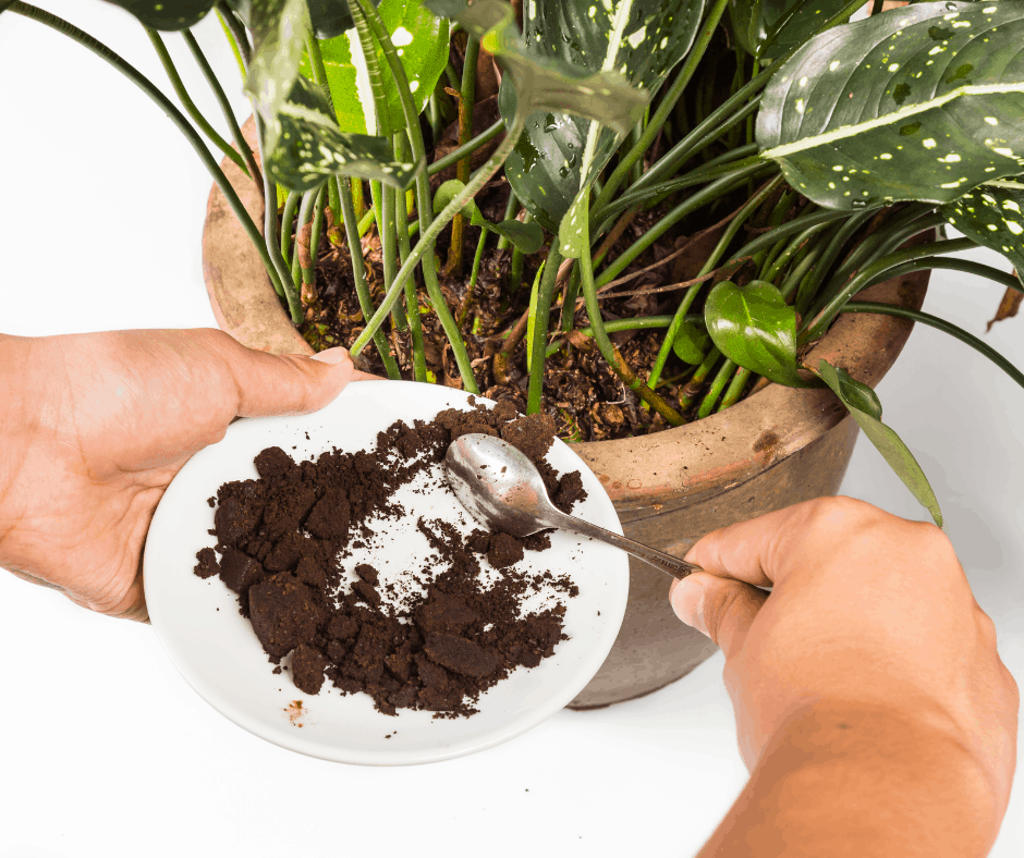 coffee grounds in plants